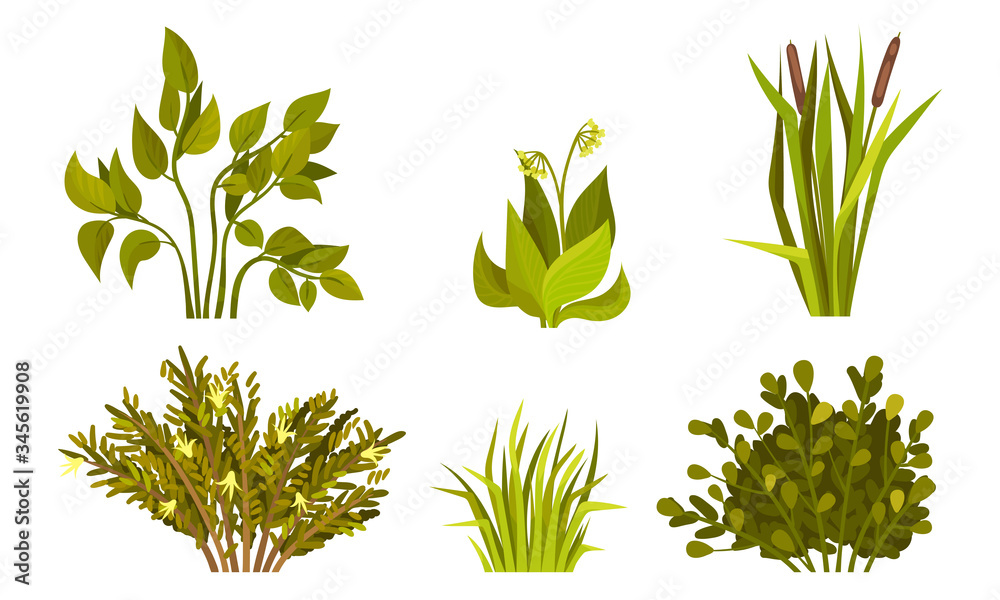 Fotografie, Obraz Different Lush Bushes and Grass with Reed Plant Vector Set