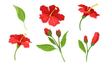 Hibiscus Red Tropical Flower W...