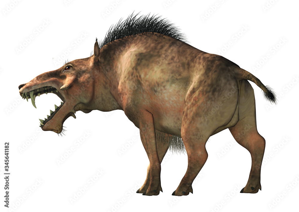 Fototapeta The Entelodon, or hell pig, is an extinct prehistoric pig or boar-like mammal that lived during the Eocene and Miocene. On a white background . 3D Rendering