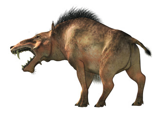 The Entelodon, or hell pig, is an extinct prehistoric pig or boar-like mammal that lived during the Eocene and Miocene. On a white background . 3D Rendering
