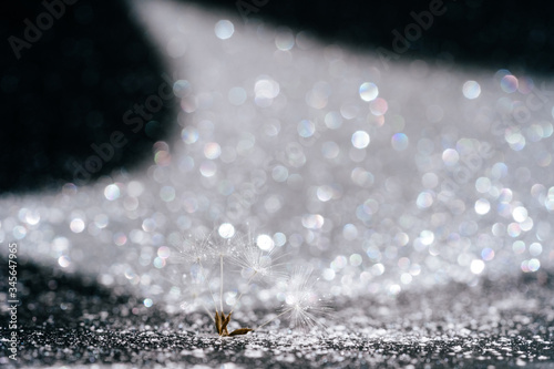 Photo Abstract Dandelion Seed on Glitter Background