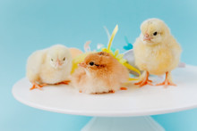 Yellow Small Cute Three Chicks...