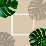 top view of tropical monstera leaf shadow with white frame on brown color background. minimal summer concept. flat lay