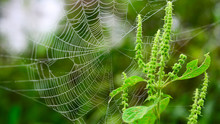 Close-up Of Spider Web By Plant