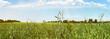 Leinwanddruck Bild Hohes Gras auf einer Wiese im Sommer - Panorama