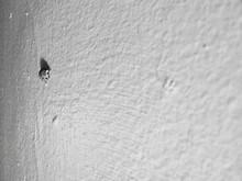Ladybug On Wall