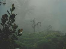 Bosque Nuboso De Cosat Rica
