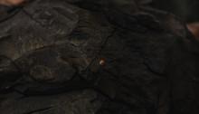 Ladybug Creeps On Black Stone