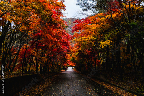 Fototapety, obrazy: Road Amidst Trees During Autumn