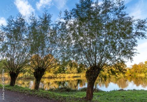 Fototapeta premium Tradycyjny, holenderski krajobraz. Rezerwat przyrody w Holandii Północnej.