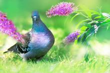 Beautiful Dove In The Garden O...