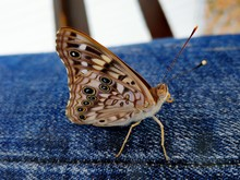 Close-up Of Butterfly On Floor