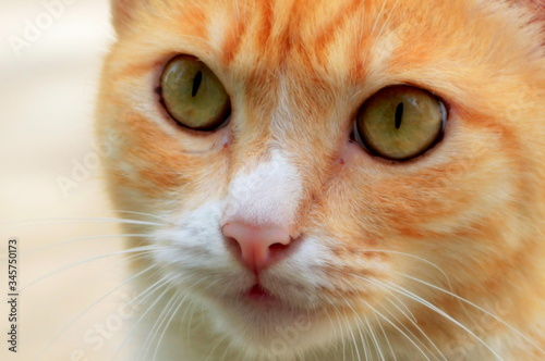 Canvastavla Close-up Of Cat