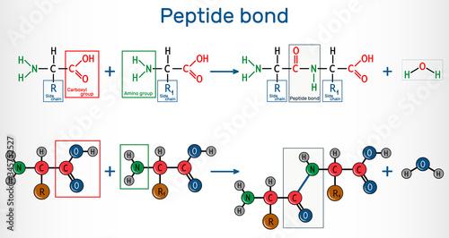 Peptide bond Canvas Print