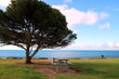 Scenic View Of Tree By Sea Against Sky