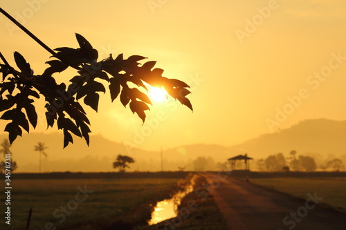 Fototapety, obrazy: Close-up Of Silhouette Tree Against Sky At Sunset