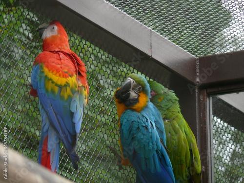 Obraz na plátně Parrots In Cage
