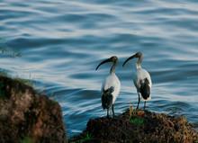 Birds At Sea