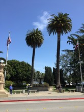 Two Palm Trees, Sausalito, California, USA - Two Giant Palm Trees Standing In A Beautiful Park Located In Downtown Sausalito, California, USA. Sausalito Is Part Of Marin County.