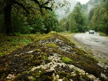 Close-up Of Moss At Roadside