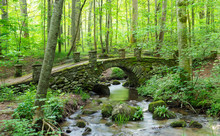 Panorama Of An Old Moss Covere...