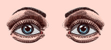 Women's Eye And Eyebrows In Vi...