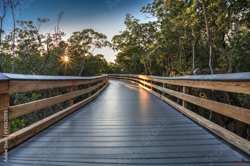 Sun shines through mangrove trees that line a Boardwalk leading down to the beac Canvas Print