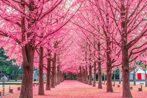 Canvastavla View Of Cherry Blossom Trees In Park
