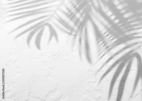 Fototapeta White gray grunge cement texture wall leaf plant shadow background.Summer tropical travel beach with minimal concept. Flat lay palm nature. obraz