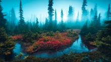 Underwater Misty Scene In The ...