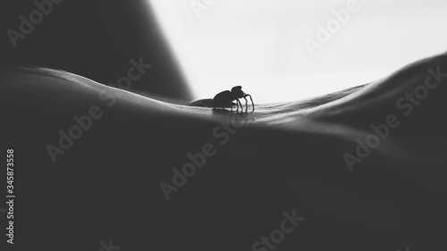 Silhouette Spider On Wall