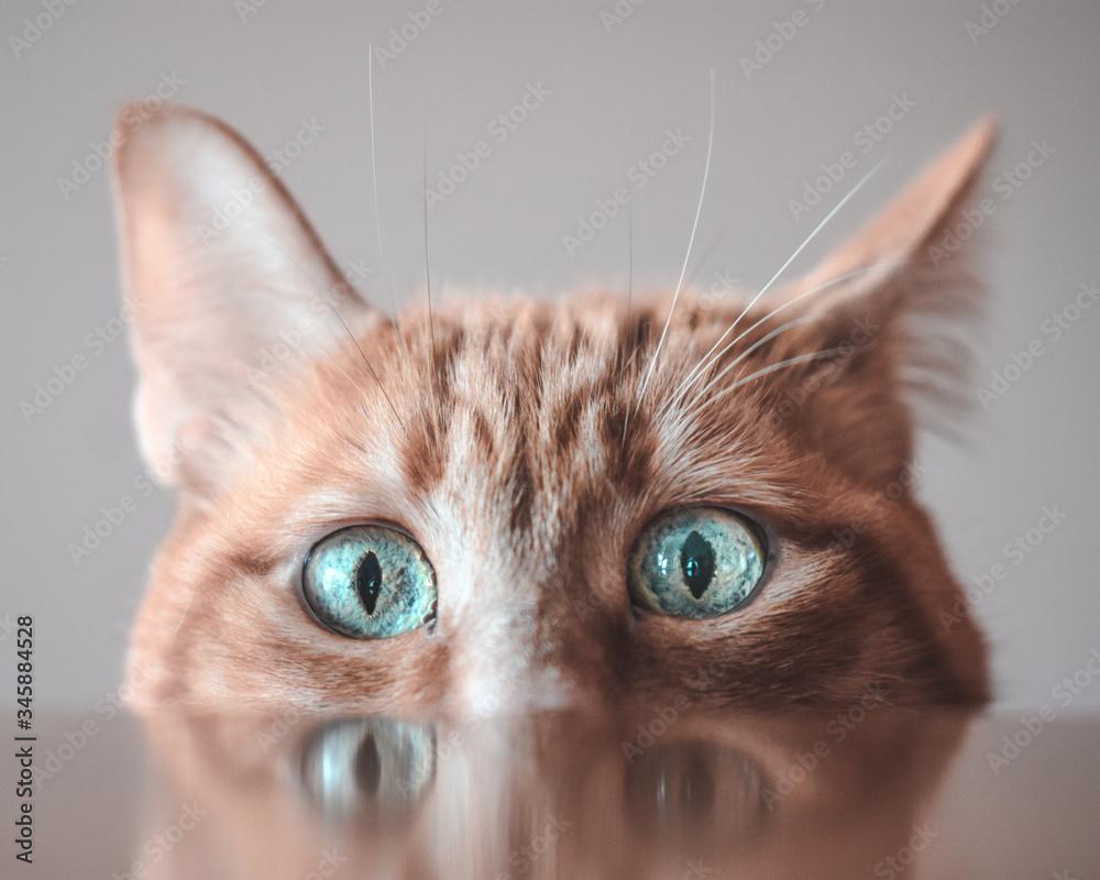 Fototapeta Felino feline gato gata mascota animal nature naturaleza cut pet