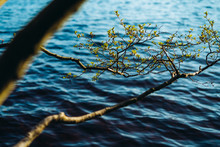 Branches Above The Water