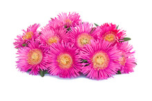 Flower Isolated On White Background. Pink Blooming Sea Fig Flowers. Carpobrotus Chilensis Is Ground Creeping Plant With Succulent Leaves In The Family Aizoaceae. Purple Blossoms With Yellow Center.