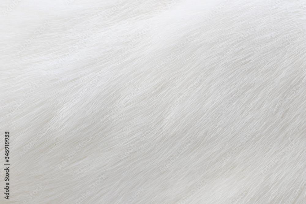 Fototapeta Pure white cat fur macro view