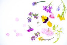 Edible Flowers On The White Background