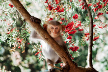 Cute Little Monkey Sits On The...