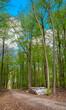 gestapelte Birkenstämme an einem Waldweg