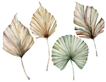 Watercolor Tropical Set With Beige And Green Palm Leaves. Hand Painted Exotic Dry Leaves Isolated On White Background. Floral Illustration For Design, Print, Fabric Or Background.