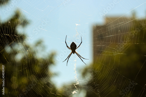 Photographie Close-up Of Spider On Web