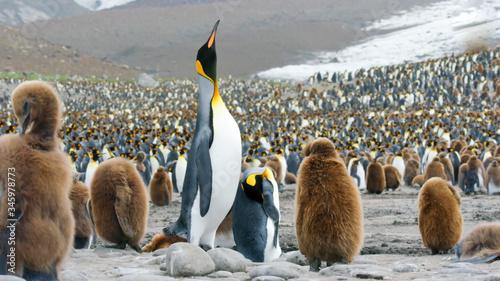 pole wildlife area group of penguins in the nature Tapéta, Fotótapéta
