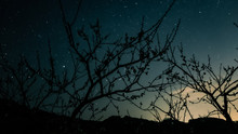 梅の隙間から星空
