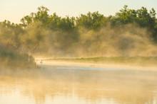 Swan Swimming In A Misty Lake ...