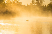 Geese And Goslings Swimming Along The Edge Of A Misty Lake Below A Blue Sky In Sunlight At Sunrise In A Spring Morning