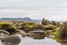 Rock Pool In The Intertidal Zo...