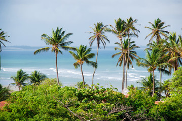 Panel Szklany Drzewa Jericoacoara is a virgin beach hidden behind the dunes of the west coast of Jijoca de Jericoacoara, Ceará, Brazil