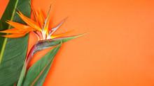 Tropical Bird Of Paradise Flow...
