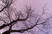 Tree Branches Against The Sky