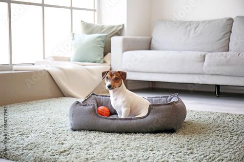 Fotografia Cute dog in pet bed at home