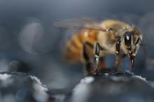 Close Up Of A Bee Macro